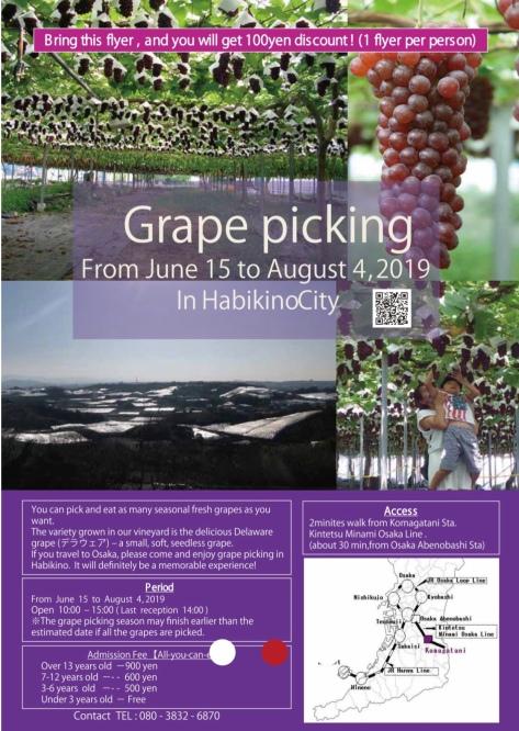 Grape Picking in OSAKA | iSEKAI Travel